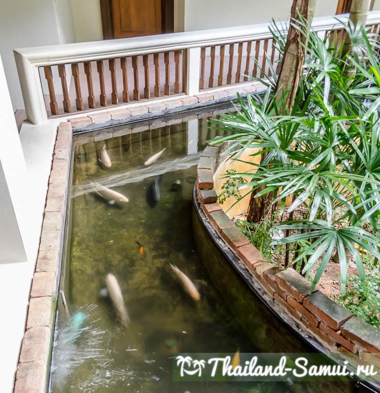 Бассейн с рыбками в отеле Thai House Beach Resort